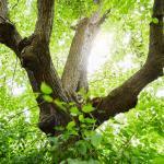Het Galgenboompje